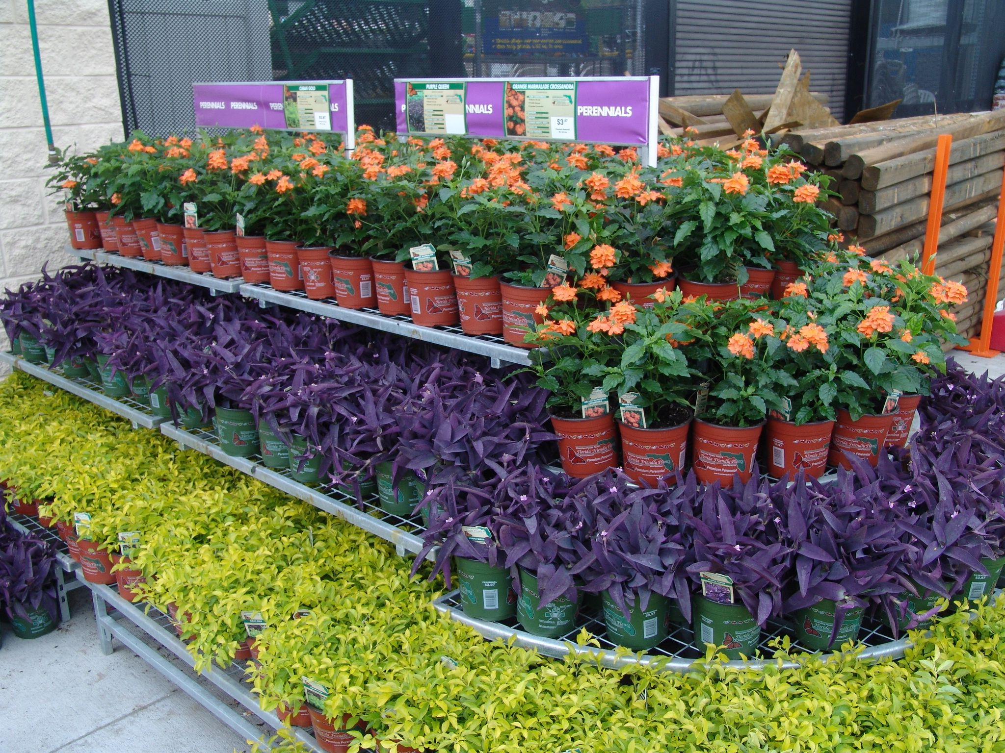 Contrasting Colors Make A Statement Florida Friendly Perennials At