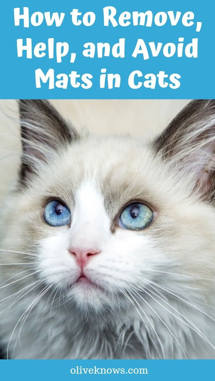 How to Remove, Help, and Avoid Mats in Cats Cat behavior