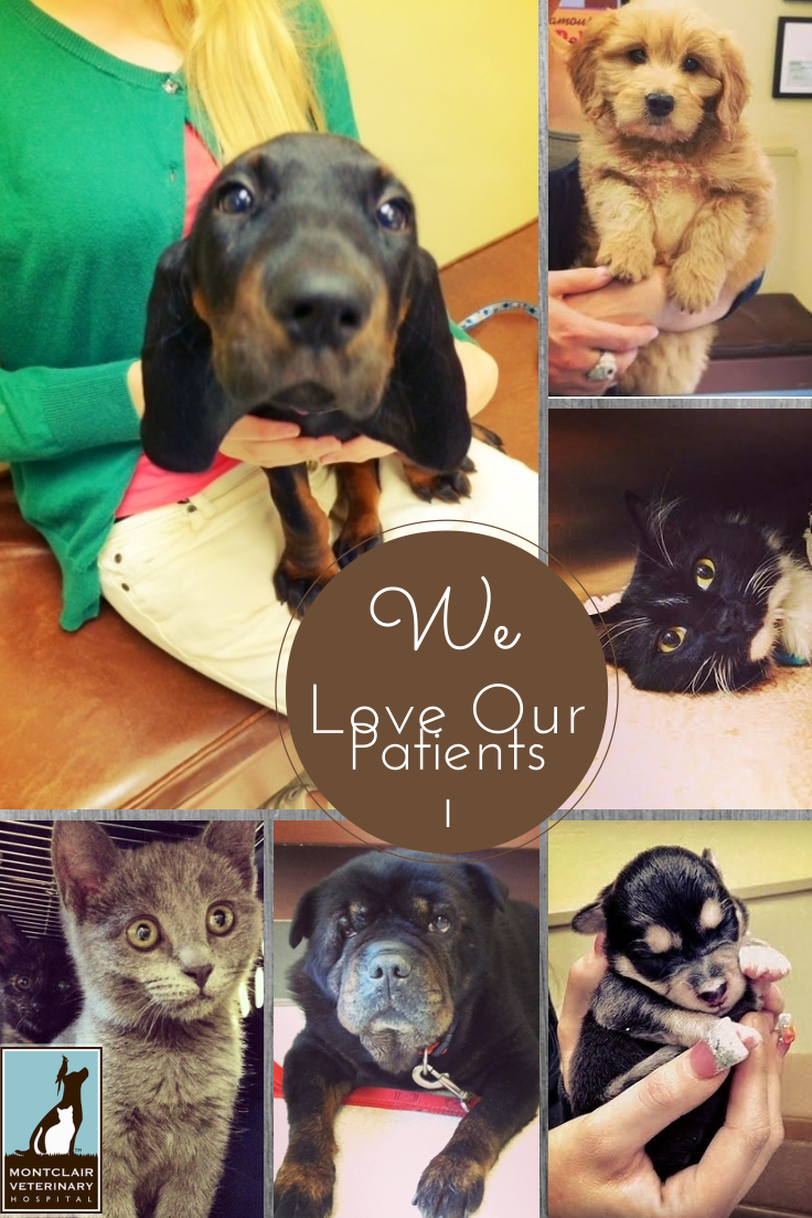 We Love Our Patients Veterinary Hospital Animal Hospital