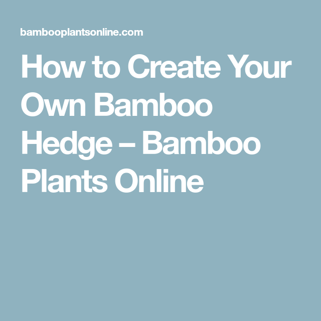 Design Your Own Exterior: How To Create Your Own Bamboo Hedge