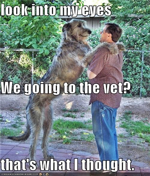So You Still Want To Go To The Vet Funny Animals