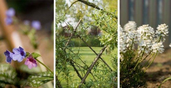 Mijn tuin: het eerste groeiseizoen! ‹ ‹ Wilg & WilgWilg & Wilg