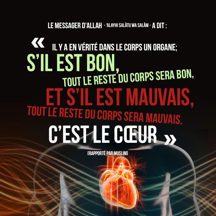 Le Prophète - 'alayhi salâtu wa salâm - a dit : « Il y a en vérité dans le corps un organe; s'il est bon, tout le reste du corps sera bon, et s'il est mauvais, tout le reste du corps sera mauvais. C'est le cœur ! » [rapporté par Muslim]