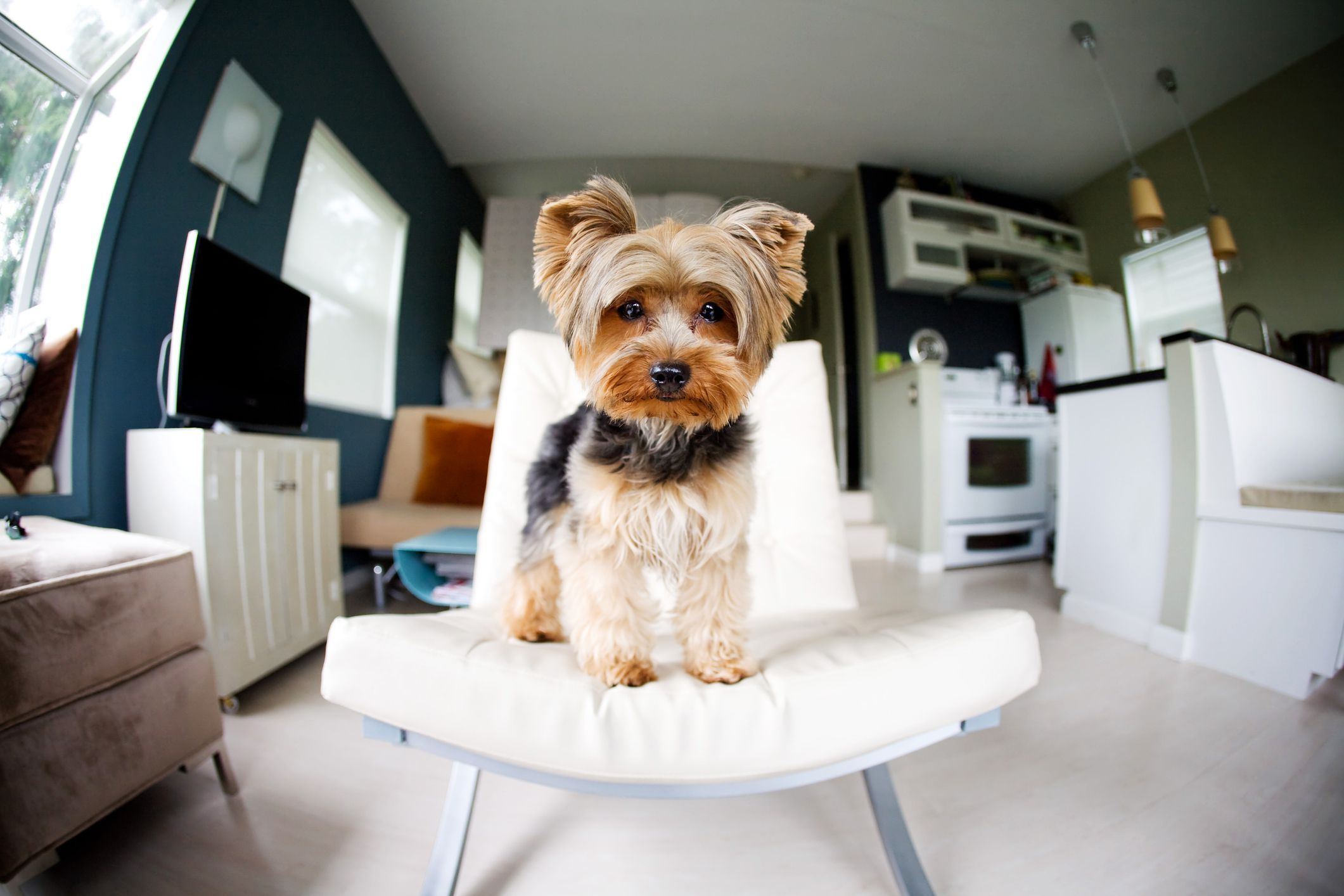Pet friendly rentals can be successful as long as you have