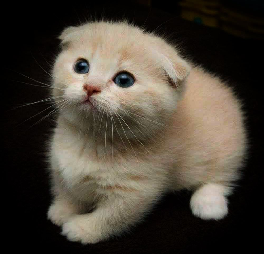 Cute Kawaii Animals Gif After Cutest Kittens Ever Images Cute Cats Kittens Cutest Pretty Cats