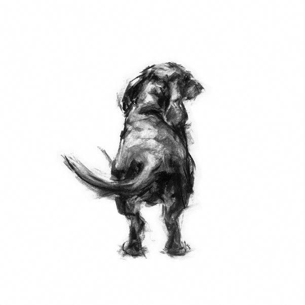 All About The Spunky Daschund Dogs Health Daschundlove