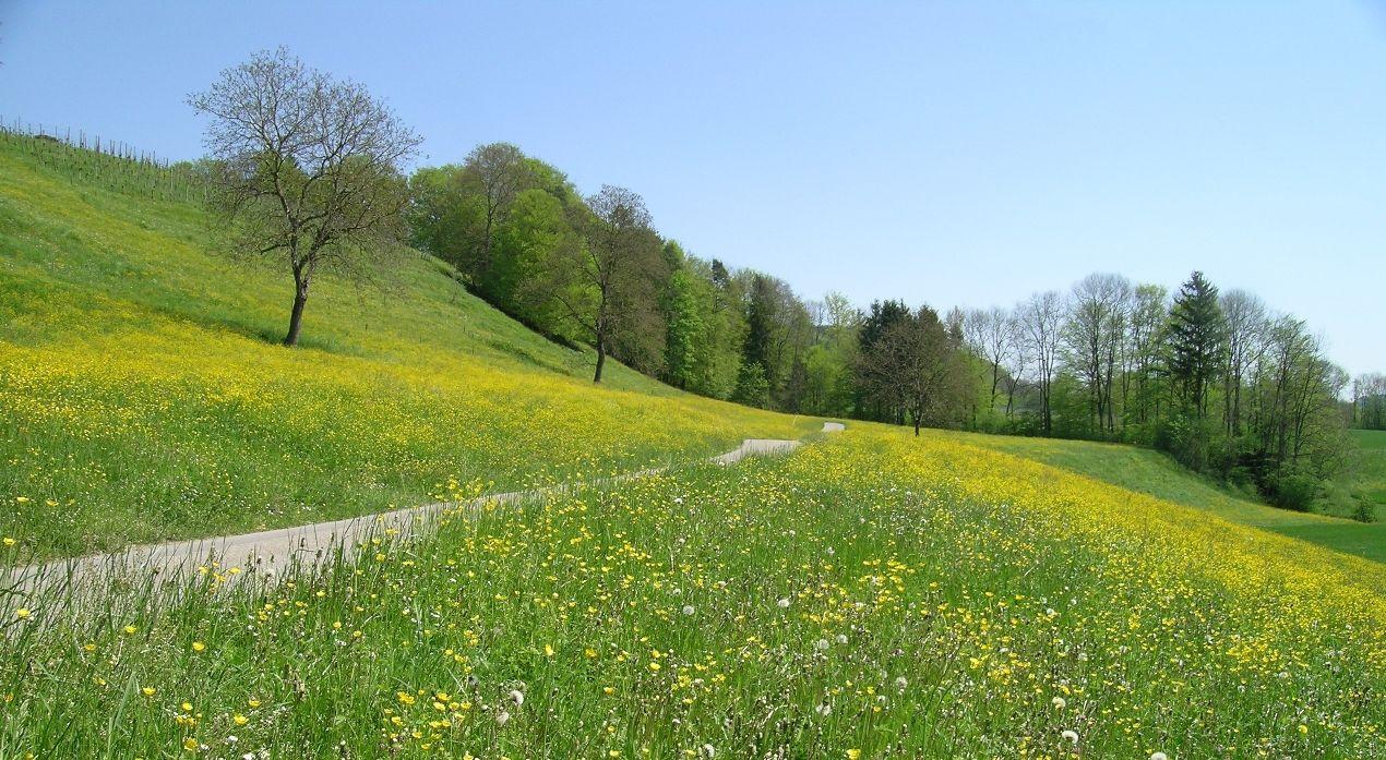 This Just Makes Us Want To Walk Through The Grass And Find A Spot For A Picnic Fruhling Wallpaper Landschaftsbilder Hintergrund Landschaft
