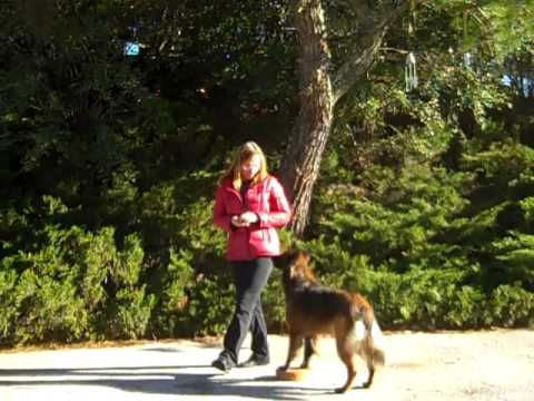 Pin On Canine Conditioning