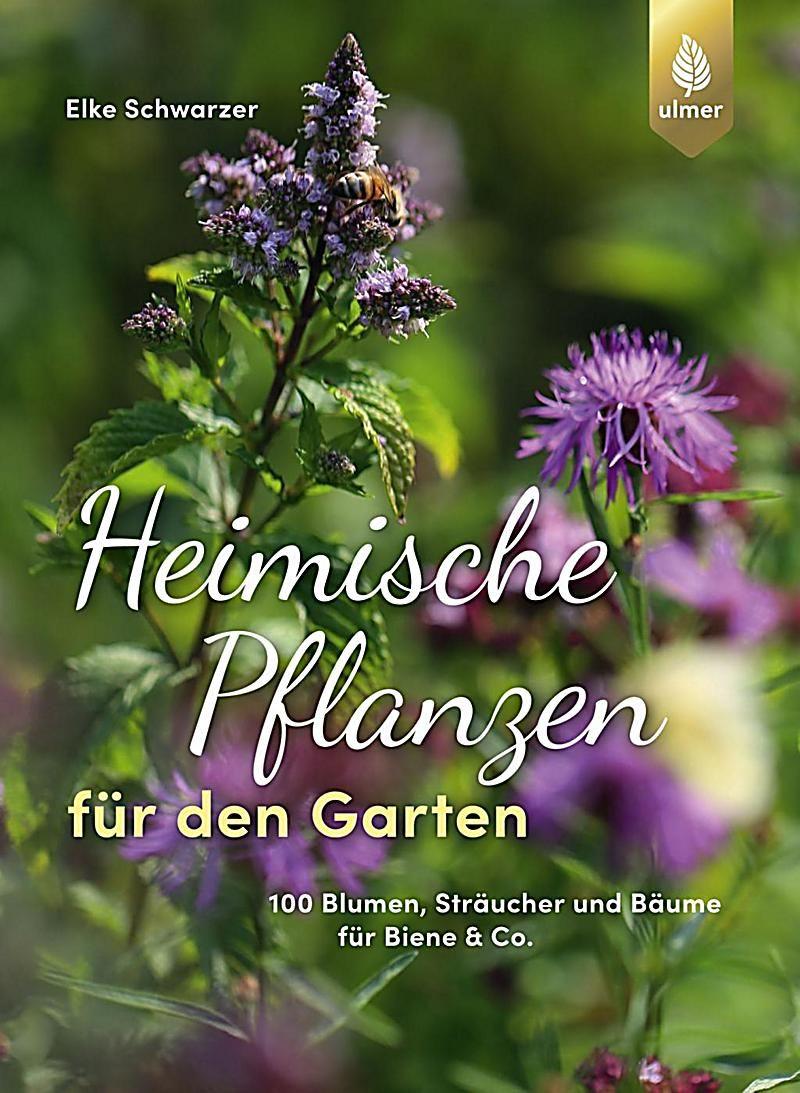 Heimische Pflanzen Fur Den Garten Elke Schwarzer Kartoniert Tb Buch In 2020 Garten Pflanzen Pflanzen Und Naturgarten