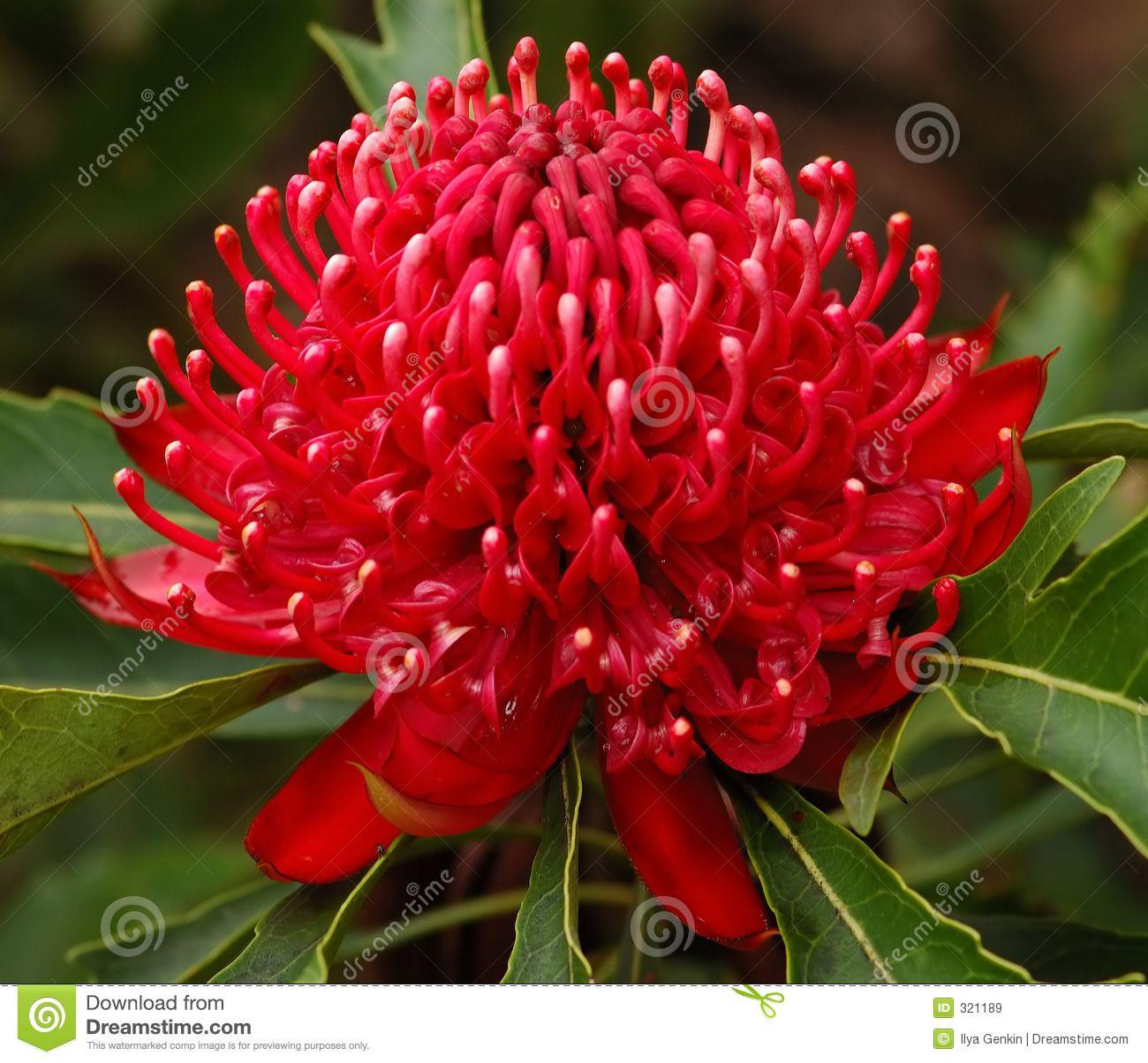 Wales Flower