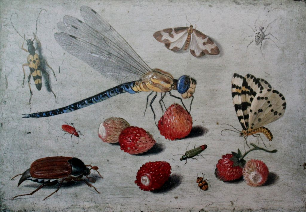 A Dragon-fly, two Moths, a Spider and some Beetles, with wild Strawberries by Jan van Kessell the Elder
