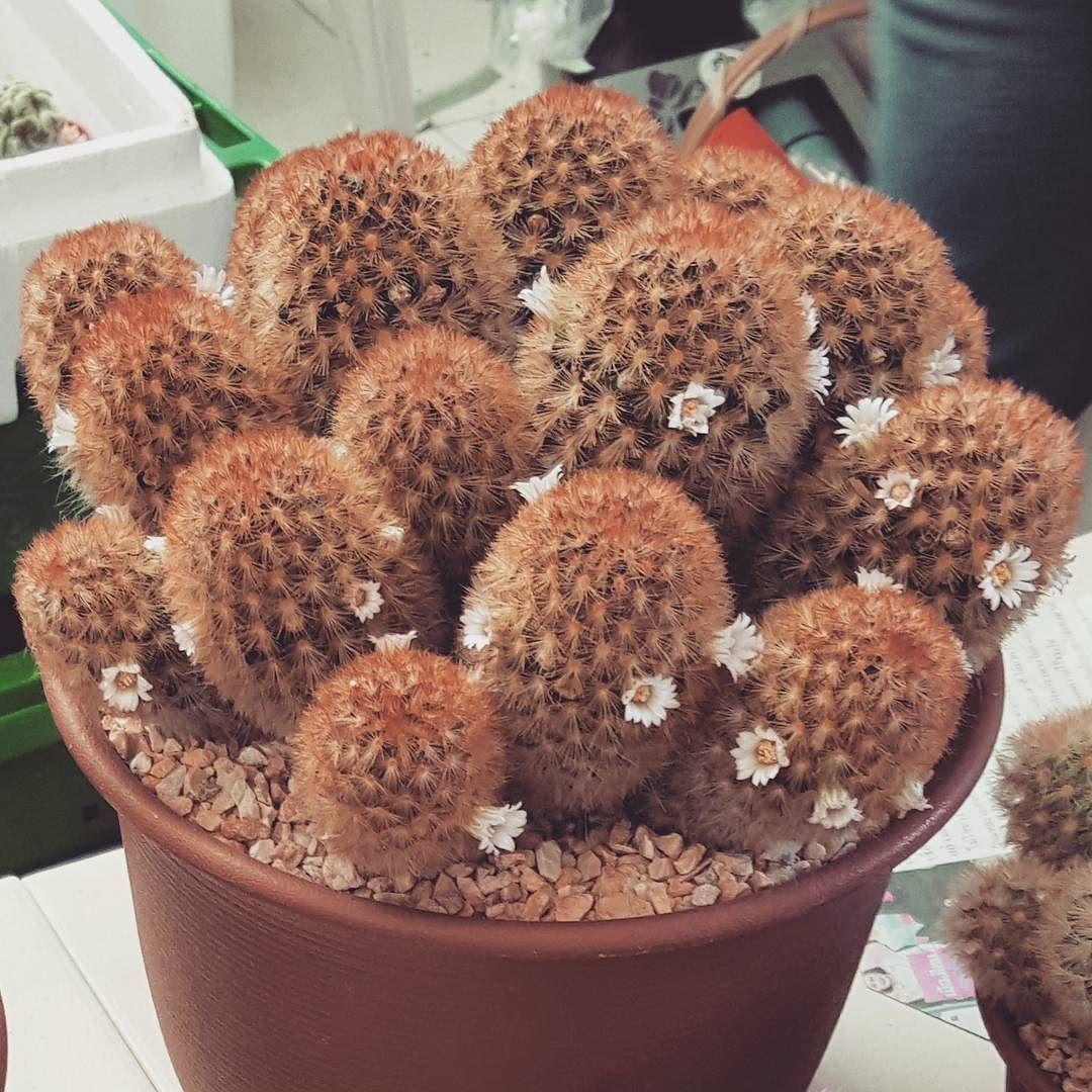❤~ Cactus~❤~Suculentas~❤