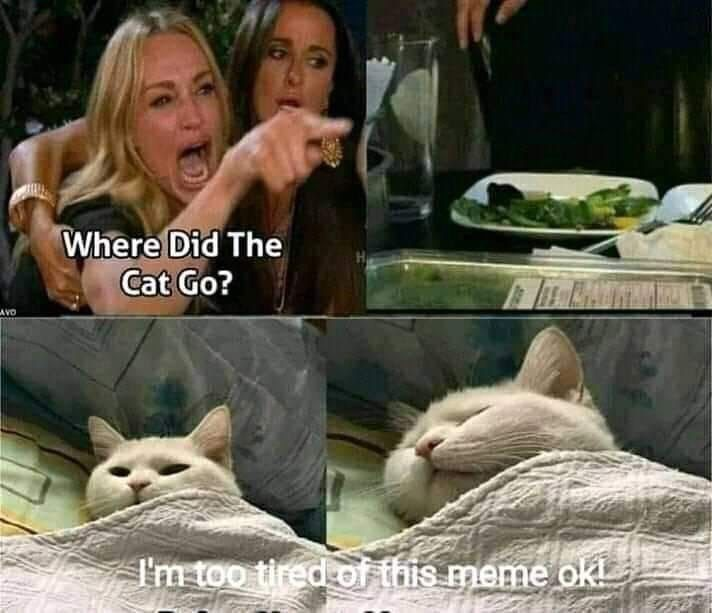Cat Superstar Of The Year: Smudge The Cat (40 Memes)