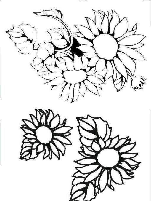 Dibujos y Plantillas para imprimir girasoles  Plantillas