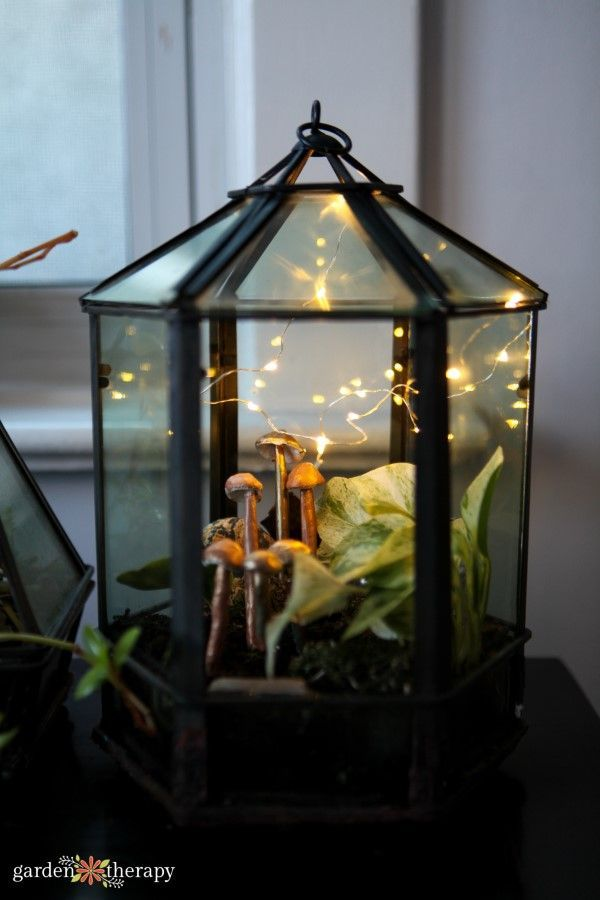Plant Care: How to Grow Tropical Plants in Geometric Terrariums Glass terrarium planted with tropical plants and decorated with fairy lights and clay mushrooms. Indoor Plant Care: How to Grow Tropical Plants in Geometric Terrariums. Glass terrarium planted with tropical plants and decorated with fairy lights and clay mushrooms. Indoo...