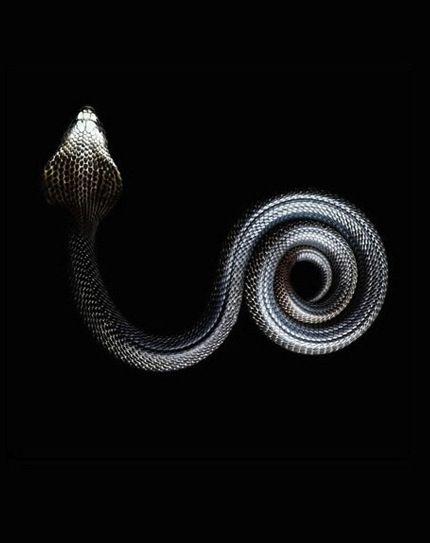 Arrow snake