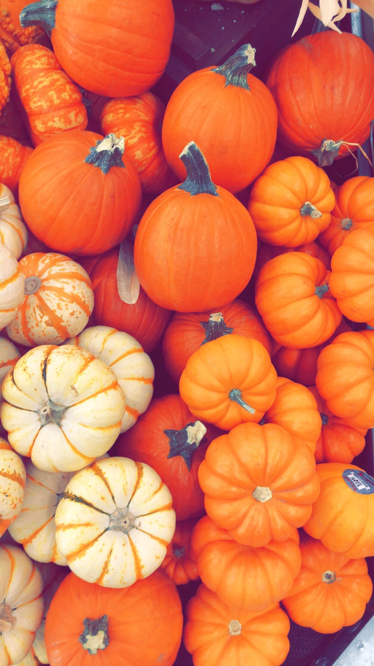 Fall Pumpkin wallpaper Iphone wallpaper fall, Fall wallpaper