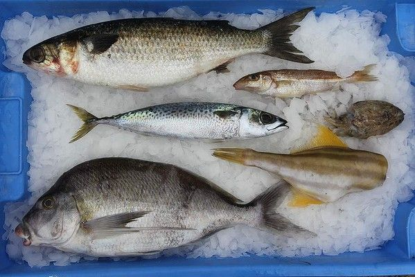 Pictured from top: sea mullet, whiting, mackerel, cuttlefish