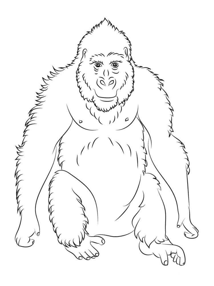 Orangutan Coloring Pages To Print