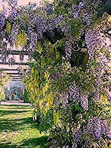Photo of Kletterpflanzen, Rankpflanzen, Schlinger als Sichtschutz im Garten