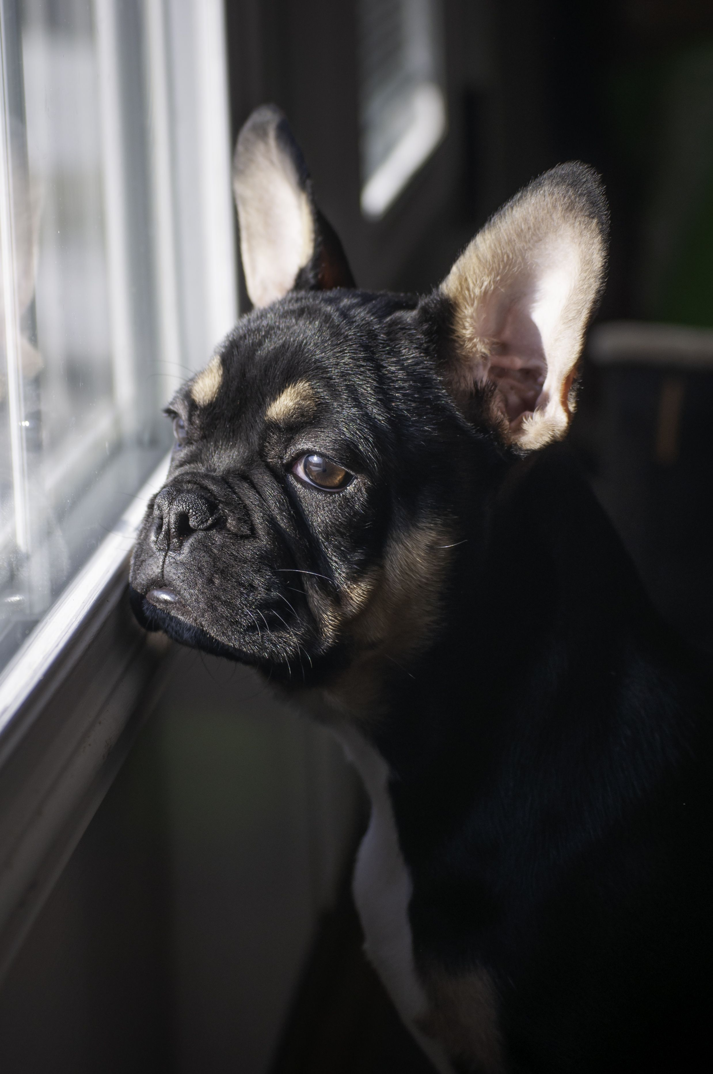 Here Are Five Small Calm Dog Breeds Perfect For Apartment Living In 2020 Calm Dog Breeds Dog Breeds Calm Dogs
