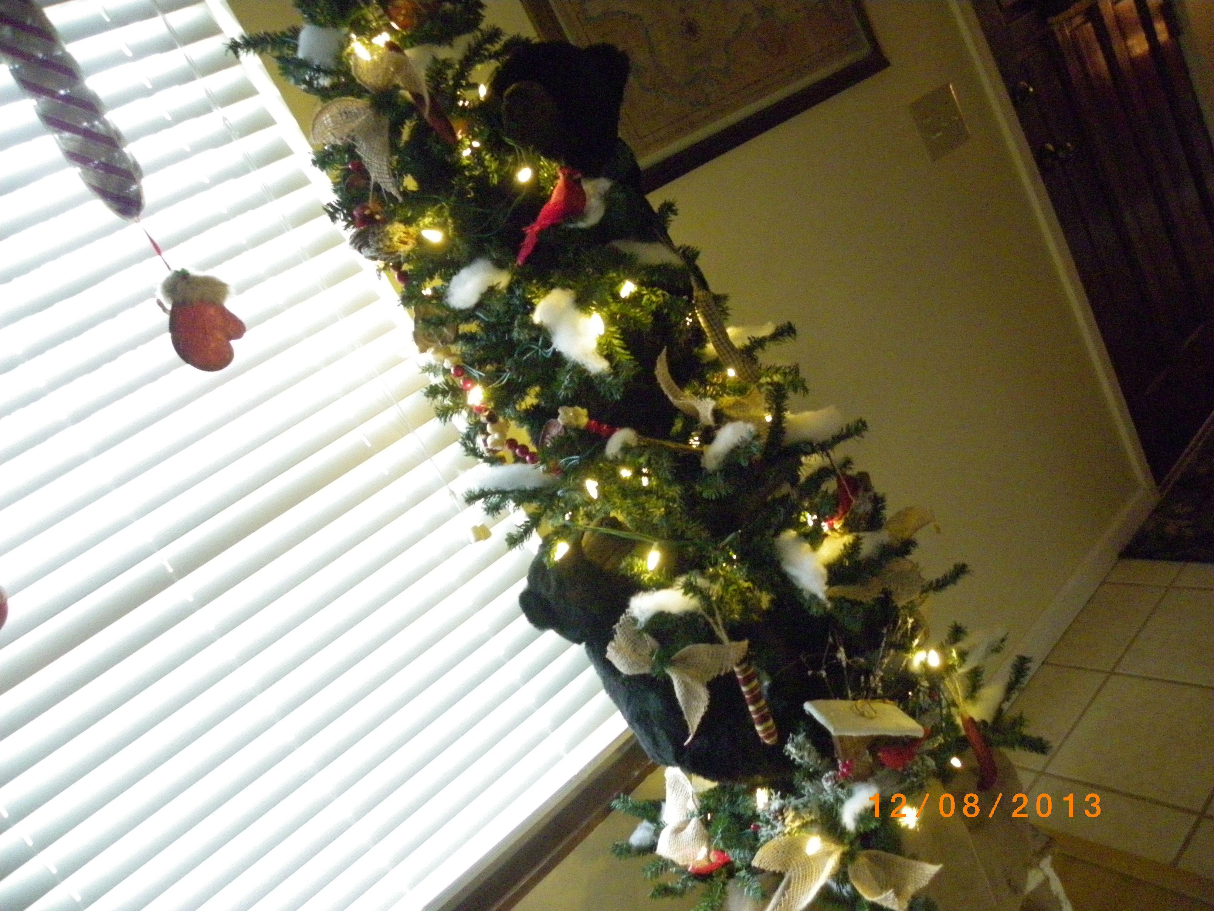 country black bear tree