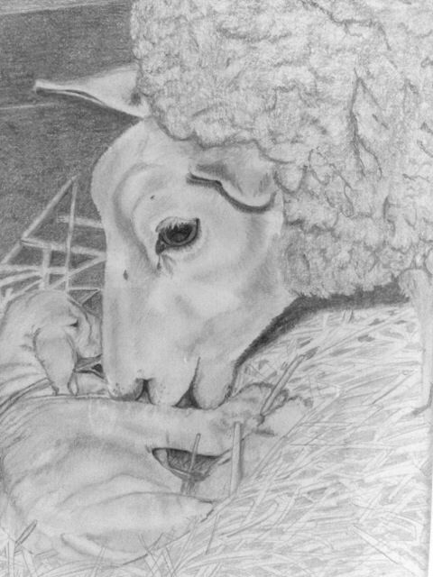 Sheep.                                                 Signed by Wilma.                                www.werkvanwilma.nl