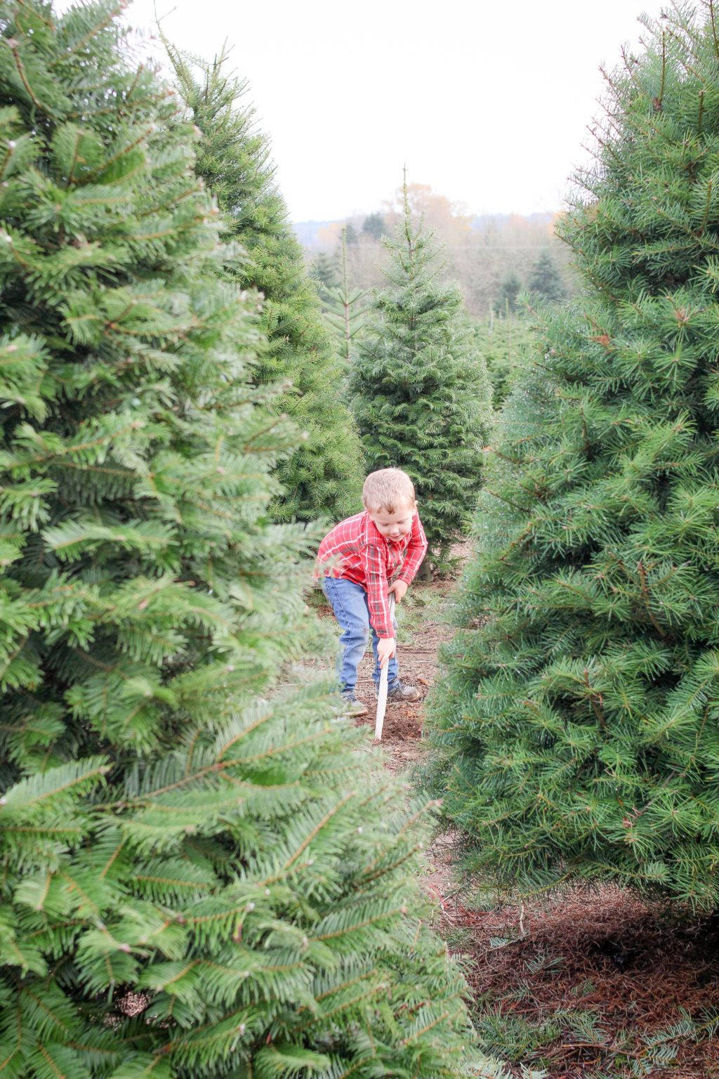 How To Find The Perfect Christmas Tree Christmas Tree Farm Happy Birthday Jesus Christmas Jesus