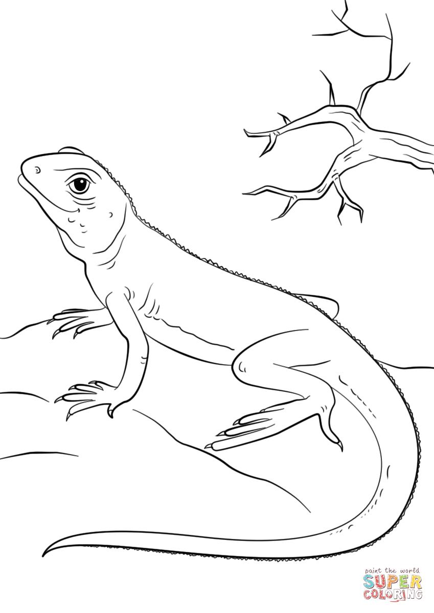 Lizard Super Coloring Preschool coloring pages