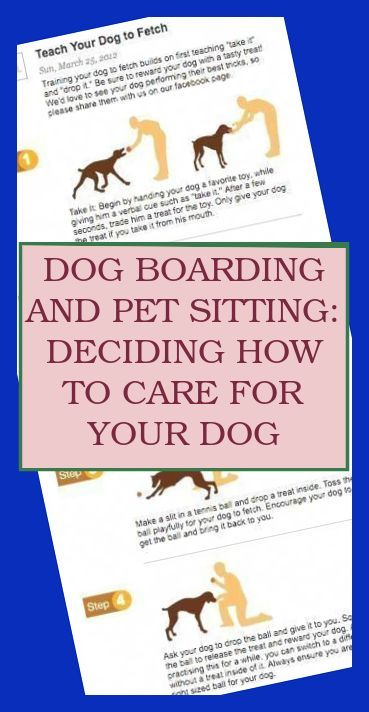 To Train A Sit Start With Your Dog Standing Holding The Reward