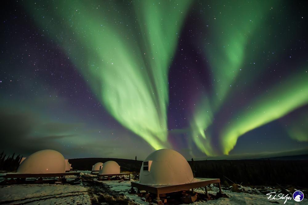 Borealis Basecamp Fairbanks Alaska Northern Lights Aurora Borealis Alaska Northern Lights Northern Lights Trips Alaska Travel