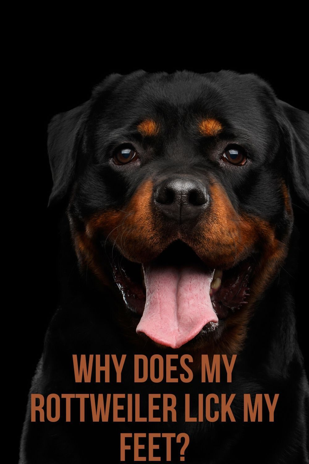 Why Does My Rottweiler Lick My Feet In 2020 Rottweiler Puppies Dog Barking At Night Rottweiler