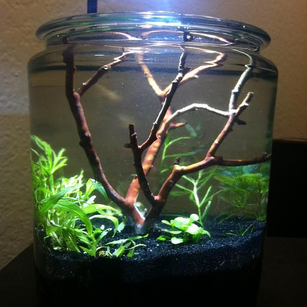 Some really cool simple pico tank on this forum thread aquascapes some really cool simple pico tank on this forum thread voltagebd Choice Image