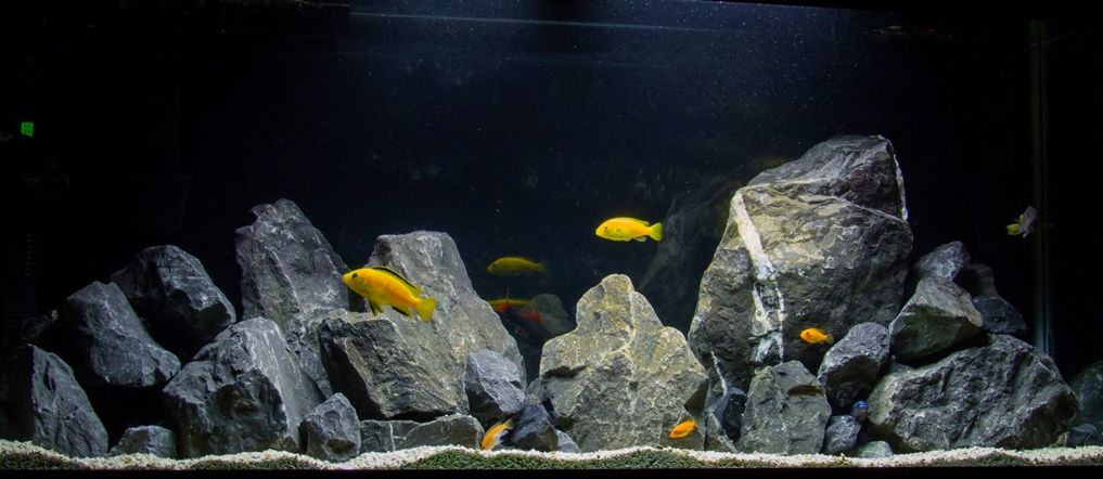 Natural african cichlid aquarium with limestone rock for African cichlid rock decoration