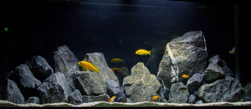 Natural African Cichlid Aquarium With Limestone Rock Cichlid Aquarium Aquarium Rocks African Cichlid Aquarium
