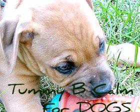 Tummy B Calm