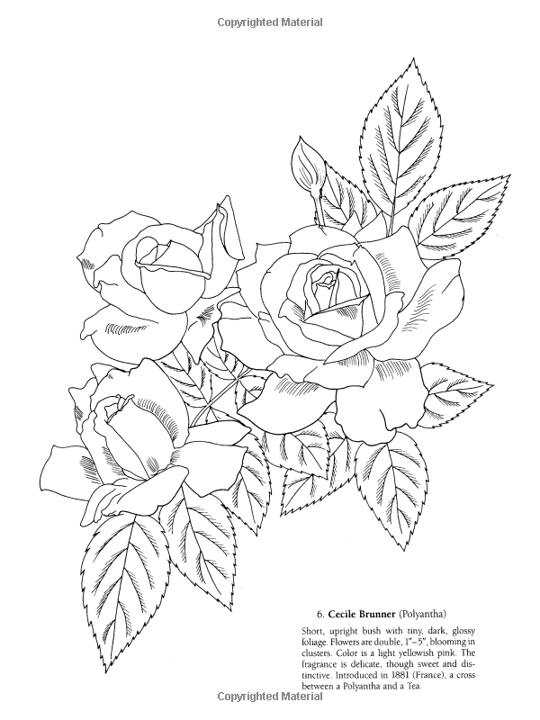 Favorite Roses Coloring Book Ilil Arbel 9780486258454 Books Amazon Ca Rose Coloring Pages Flower Drawing Bush Drawing