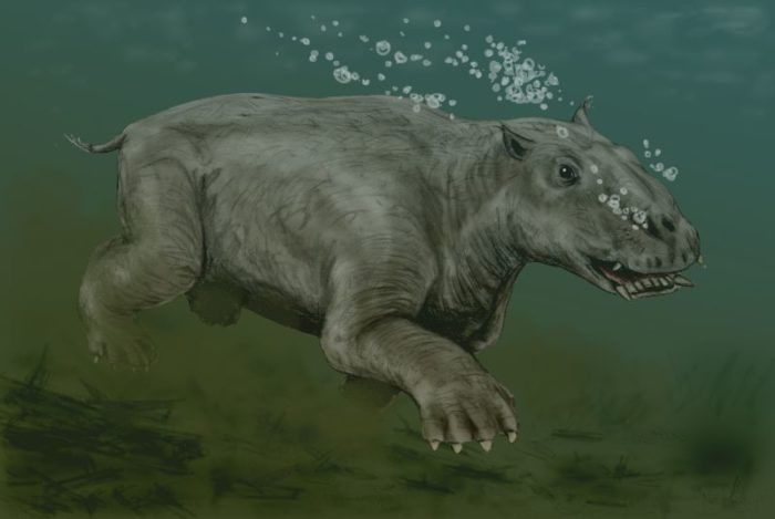 A Sea Creature From Millions Of Years Ago Was Found In Alaska Prehistoric Animals Ancient Animals Giant Animals