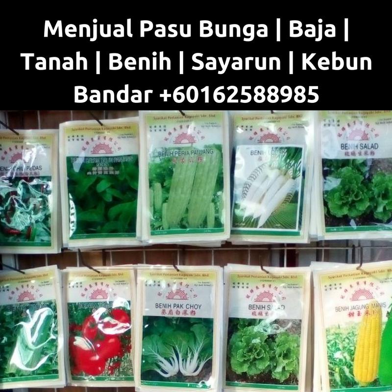 Kebun Salad In English