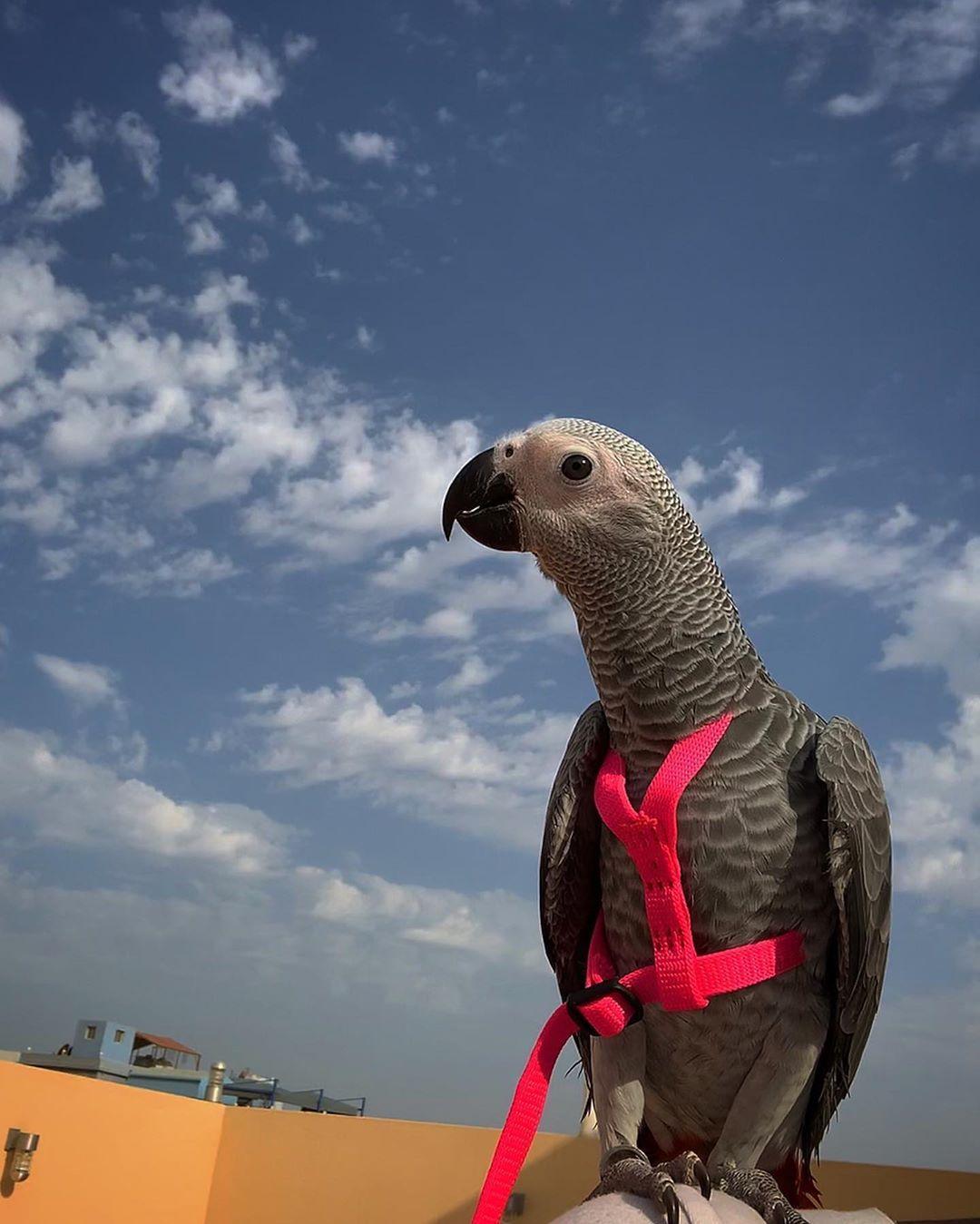 شي مختصر معناه إنت السعادة حلوة الحياة وياك والدنيا جنة طيور ببغاء طيور الحب Parrots Birdlover Birds Bird Love Parrot Animals