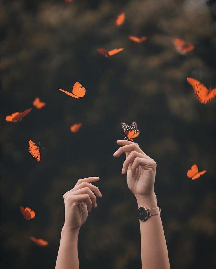 #animals #hands #flores #wanderlust #animals #butterflies
