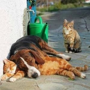 Like dogs and cats :)) by Olive Oyl