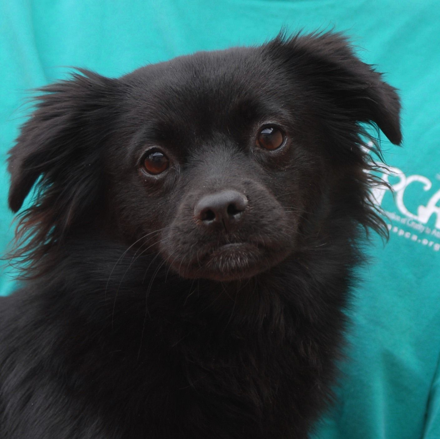 Sheri Is An Endearing Junior Puppy Who Needs Someone To Love And She Debuts For Adoption Today At Nevada Spca Puppies And Kitties Animal Lover Mixed Breed Dogs