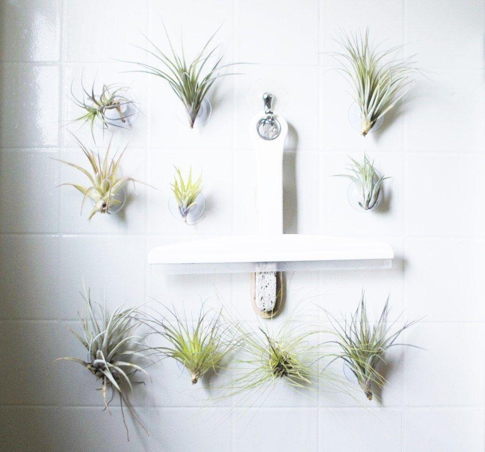 49+ Hanging succulents in bathroom ideas
