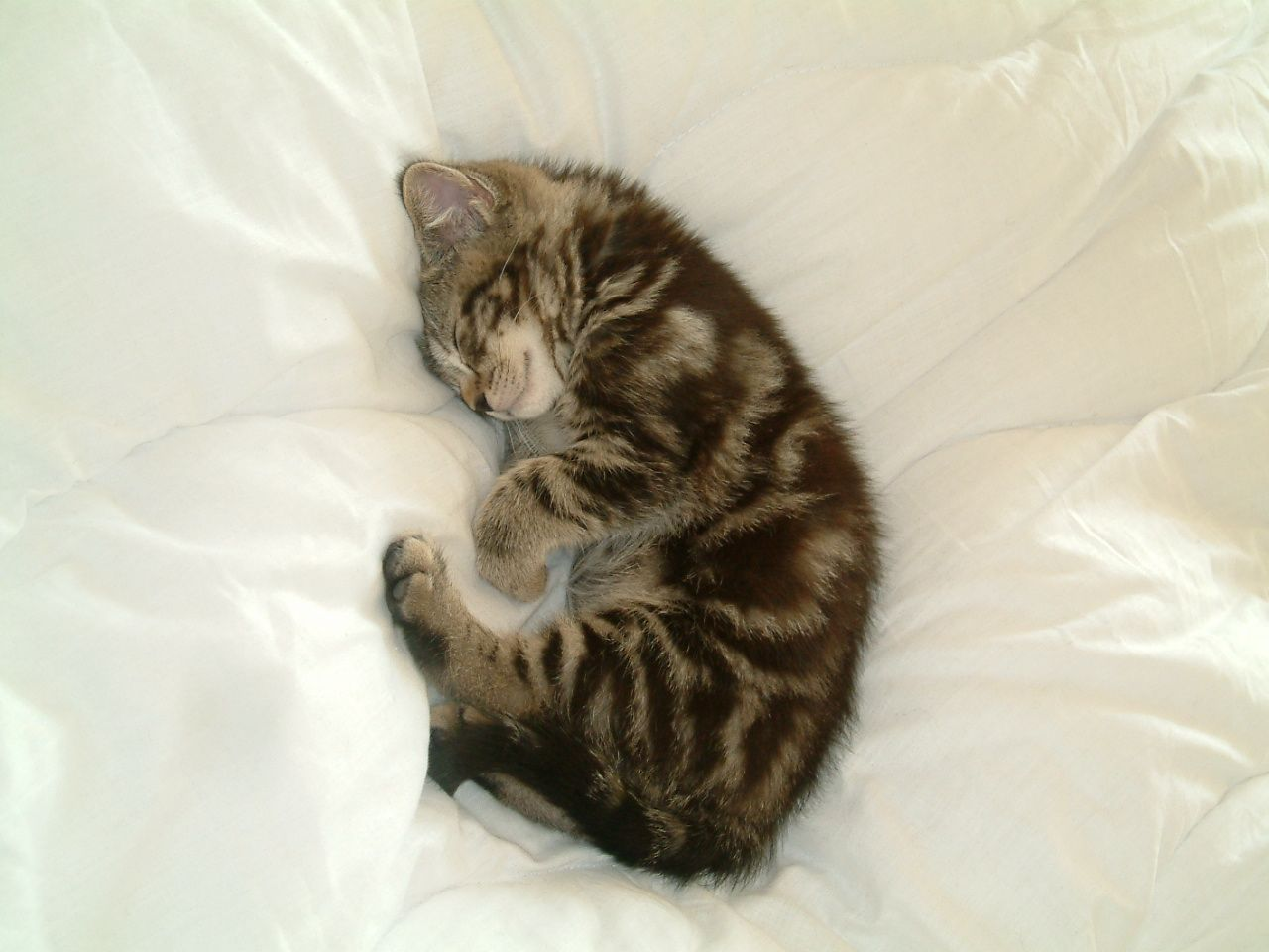 my tomcat bruno