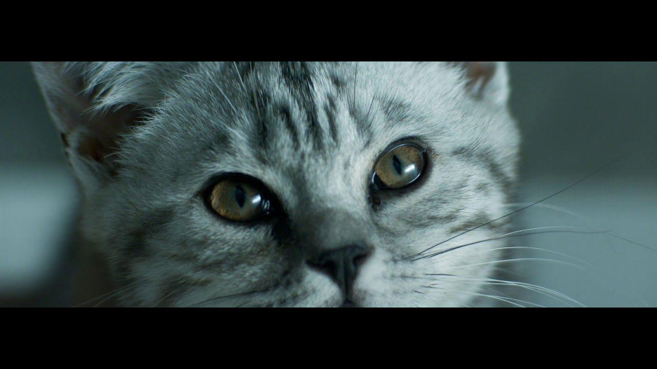 Curious Cats Rain Whiskas Tv Ad In 2020 Curious Cat Cats Tabby Kitten