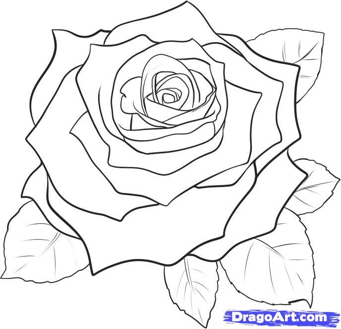 d3dd8e70df8f8 how to draw a rose | How to Draw a Realistic Rose, Draw Real Rose, Step by  Step, Flowers .