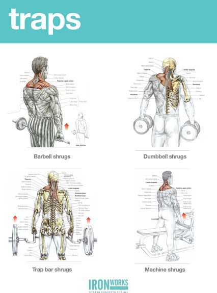 Pin By Sara Nong On Body Building Traps Workout Chest Workout Women Biceps Workout