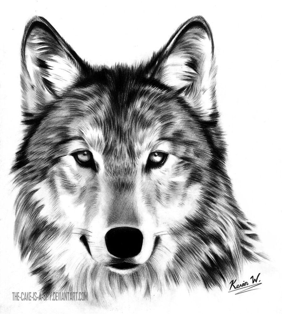Волк картинка черно белая мордочка