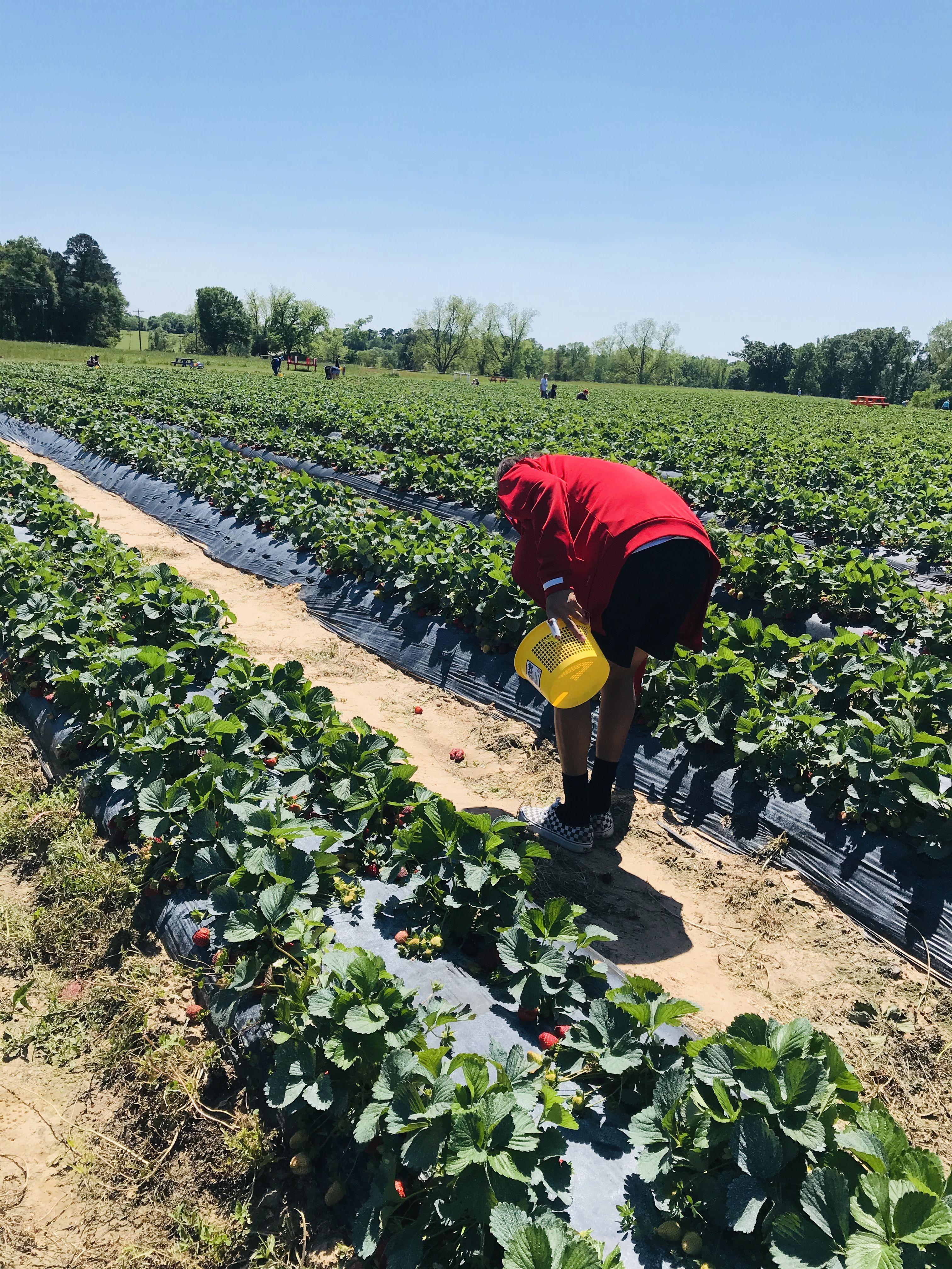 #vero #qualitytime #son #strawberry #picking